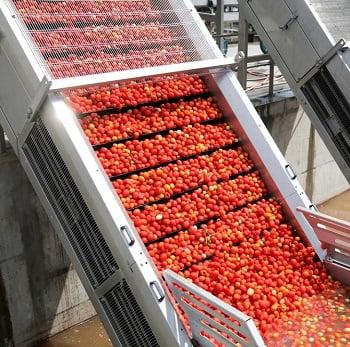 shutterstock_739029355 tomato processing 350w